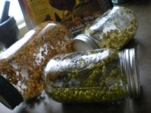 sprout in jars